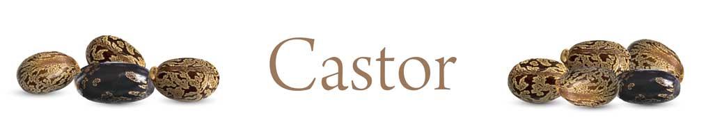 castor-01.jpg