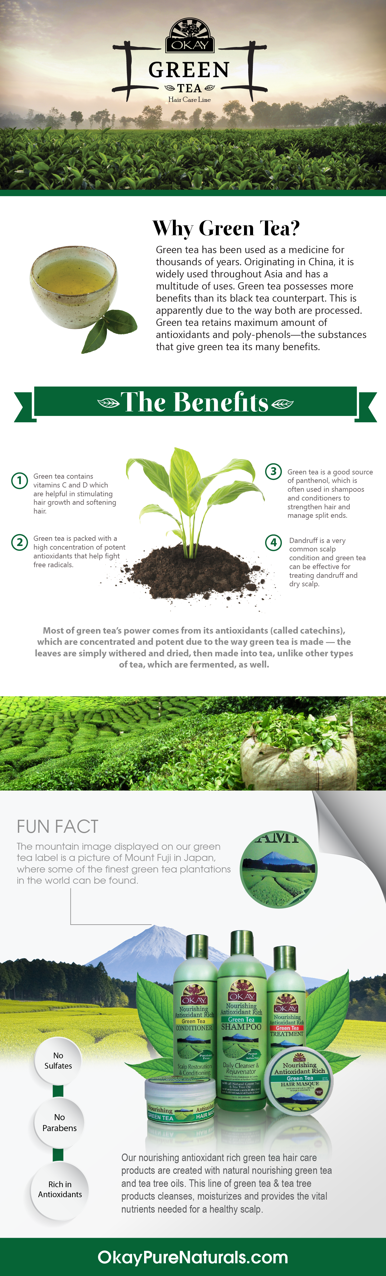 green-tea-info-graphic-02.png