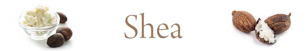 shea-01.jpg