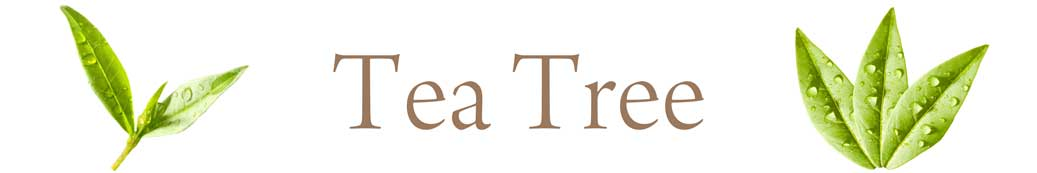 tea-tree-01.jpg